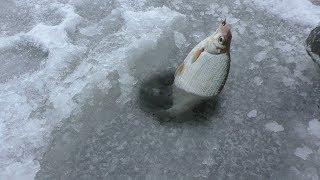 ЗИМНЯЯ РЫБАЛКА в Астрахани. Ловим рыбу для жерлиц. РЫБАЛКА 2020 г.,