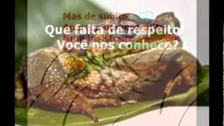 História infantil: Os sapos e o mosquito, de Teresa Cristina flordecaju. Foto: Google.