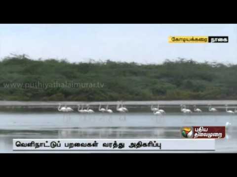 More migratory birds arrive at Kodiyakarai bird sanctuary