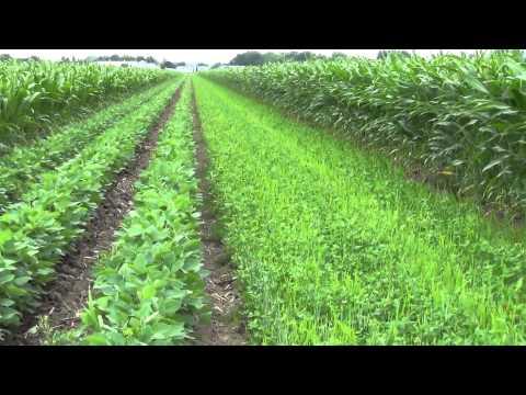 Production de grandes cultures biologiques