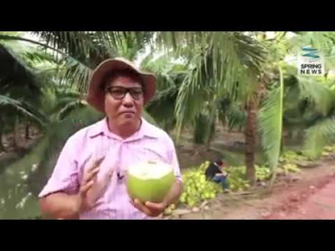 Amazing agriculture with coconut tree and how to plant the coco nute