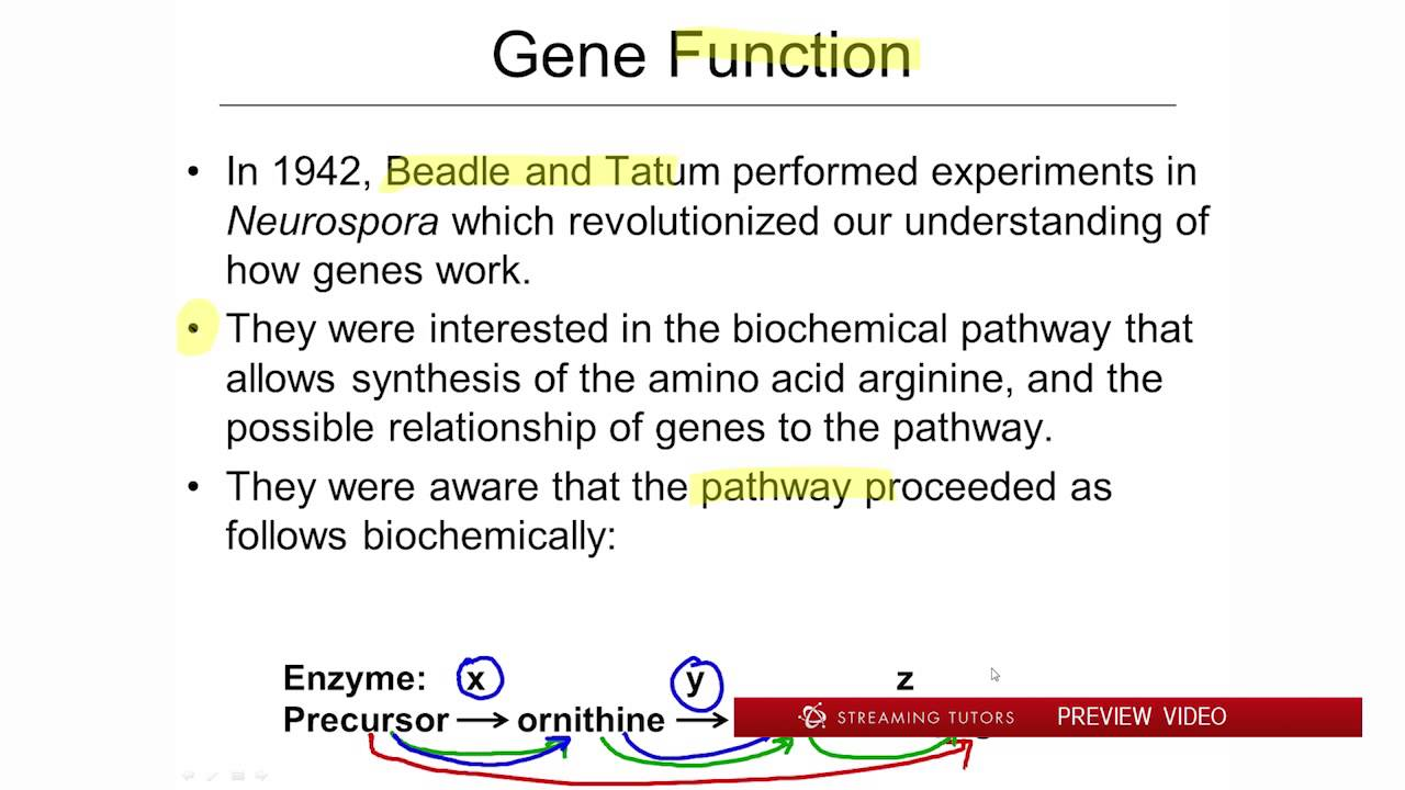 What is a gene 47