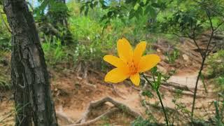 충북 괴산 칠보산(환상의 백패킹박지)#등산