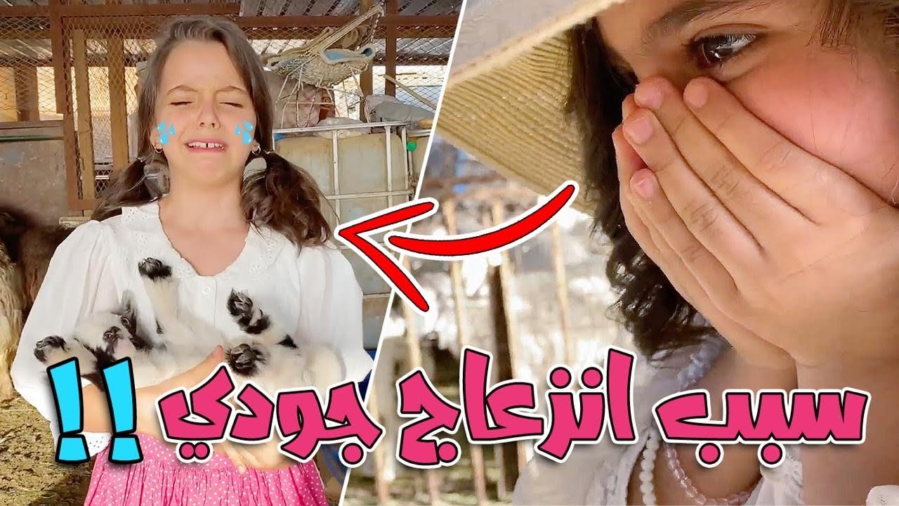 الماعز القزم في العيد !!   ليش خافت جودي 😱