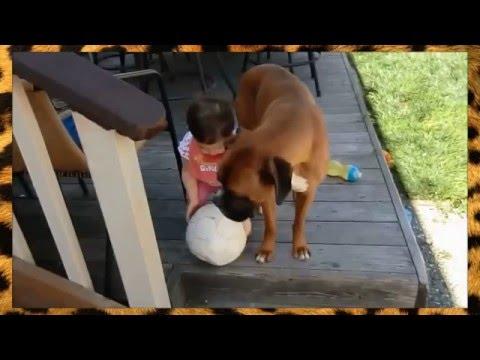 Видео прикол: Собаки и маленькие дети