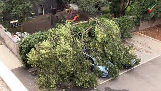 🚨🌳Feuerwehreinsatz großer Baum auf Autos - Feuerwehr zersägt Baum - Folgeeinsatz - Feuerwehr-Anfahrt