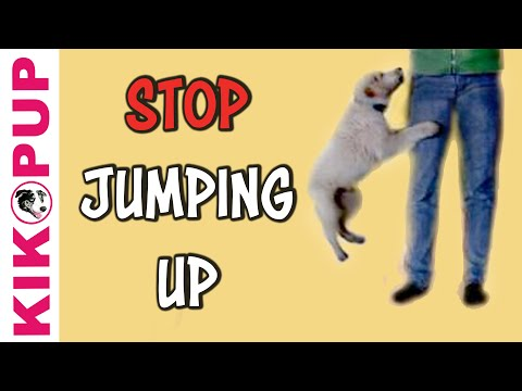 How to stop your puppy jumping up!