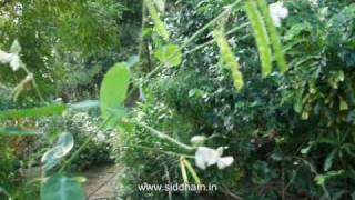 Herbal Health Remedies from Alternative system of Medicine - Siddha