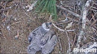 swfl-eagles-inquisitive-e9-moving-sticks-tails-1-27-17