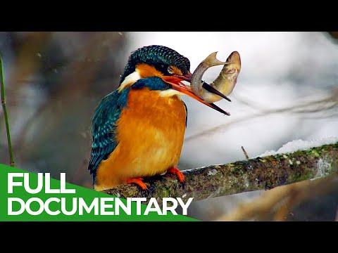 Wild River Rhine | Free Documentary Nature