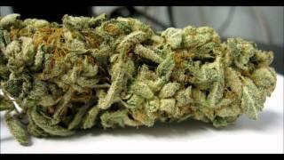 weed instrumentals pt 4