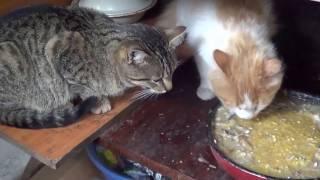 Котиковая жизнь