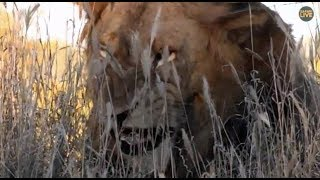 Pt 1 Safari Live's Sunset Safari Drive at 3:00 PM on May 07, 2018 ( Avoca Male )