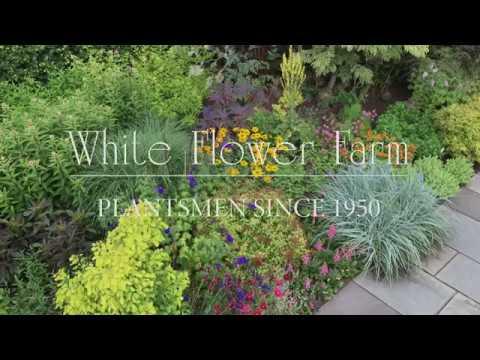 Learn about white flower farm youtube learn about white flower farm mightylinksfo