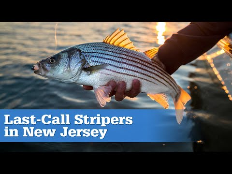 S15 Ep3 Last-Call Striped Bass (Full Episode)