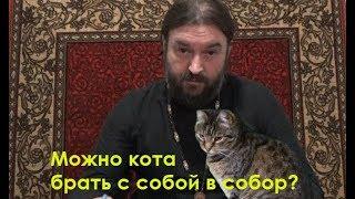 Можно ли кота брать в храм? Протоиерей Андрей Ткачев