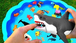Learn Wild Animals Names With Animal Pool For Kids | Toy Animals For Children