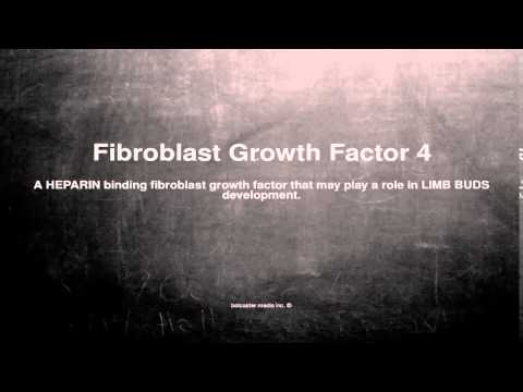 Medical vocabulary: What does Fibroblast Growth Factor 4 mean