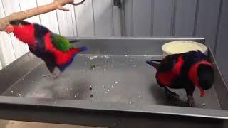 Приколы с животными - Смешные коты, кошки, собаки, попугаи 4