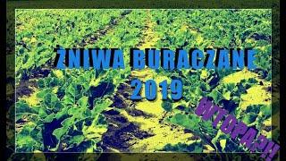 Żniwa Buraczane 2019♦New Holland T7☆Maxtron 620♦WTOPA !!!
