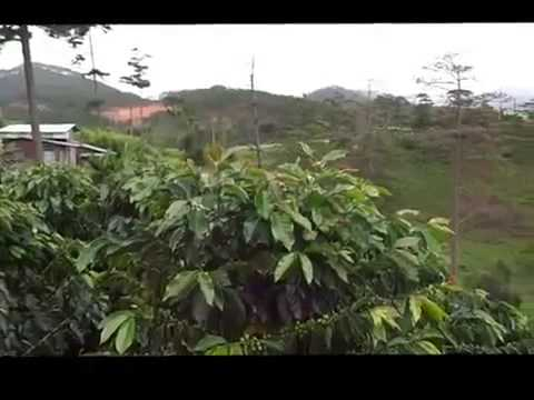 Coffee Farm Tour Vietnam Deluxe Vietnam Tours