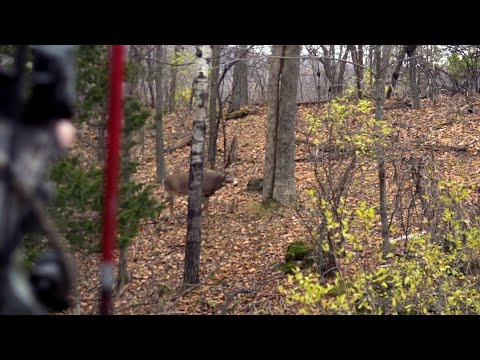 Morning Rut Hunt Tactic For Mature Bucks