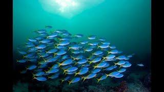 Природоведение. Рыбы