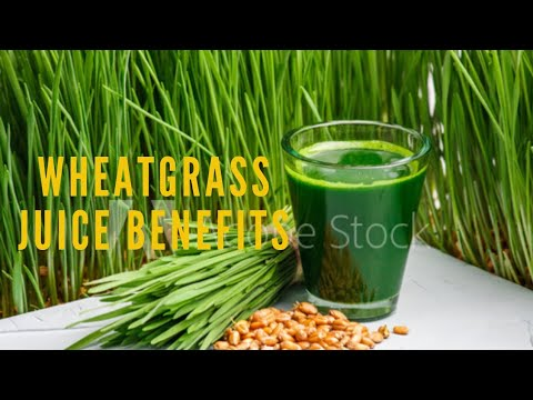 wheatgrass-benefits-|-what-you-didn't-know-about-wheatgrass-juice