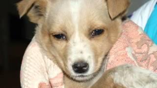 Расправа над собакой и щенками