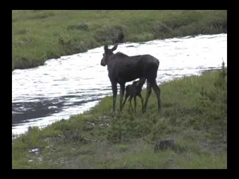 Wildlife in Grand County Colorado