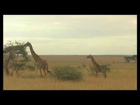 Wild Africa.wild animals of Africa in their natural environment