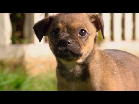 'Surprise, It's a Puppy!' - Finding Happiness