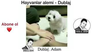 Hayvanlar Alemi Dublaj - Full - 2018