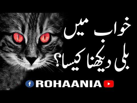 Khawab mai Billi Dekhna? - Seeing Cat in a dream  | Haq Baat