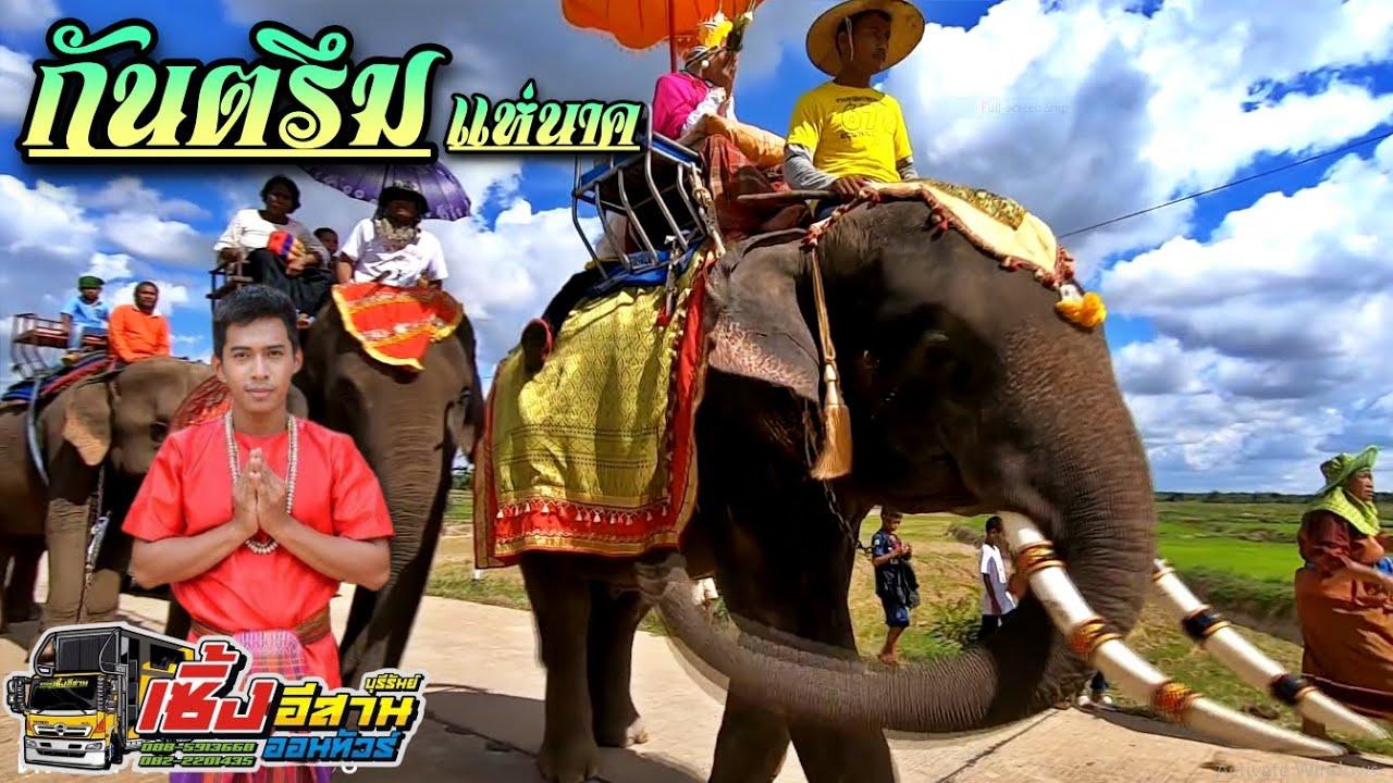แห่นาคขี่ช้าง(เมืองสุรินทร์) ช้างเยอะมาก กันตรึมวันชัย ศรรัก byรถแห่เซิ้งอีสาน