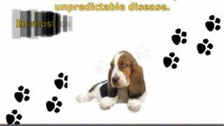 What You Should Know About Dog Pancreatitis!