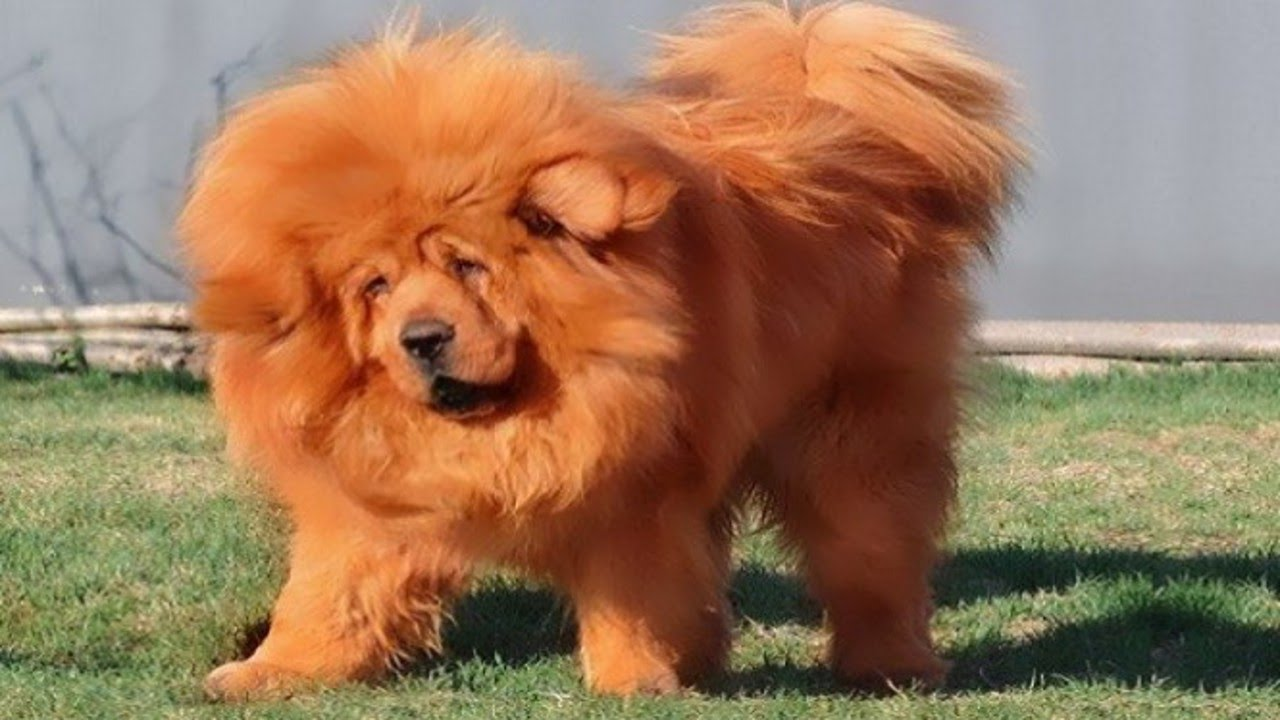 Coolest Dog Breeds In The World