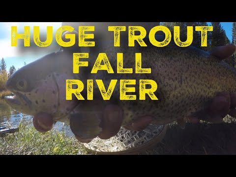Trophy trout Fly fishing Fall River