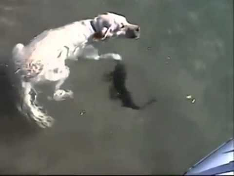 Dog & fish Playing Together