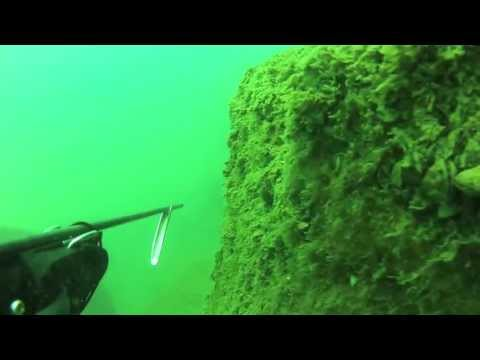Spearfishing Grand Haven Pier on Lake Michigan