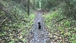 Old Railway Line Dog Walk ( Midhants Railway Line ) - Martyr Worthy - Hampshire