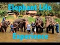 Elephant Life Experience - My Day with Elephants in Chiang Mai, Thailand