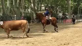Tri du bétail à Beaucaire - juillet 2018