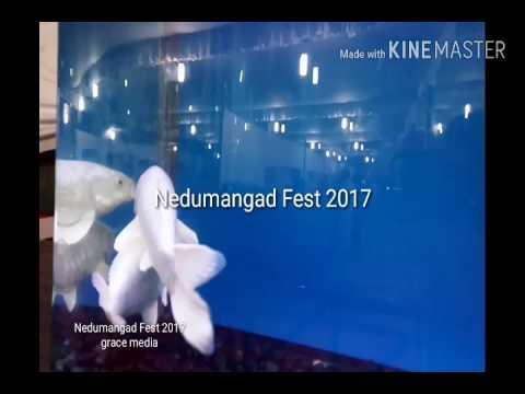 Nedumangad Fest 2017----- Grace Media........