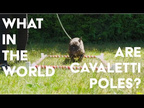 Cavaletti Pole Training for Dog Shows