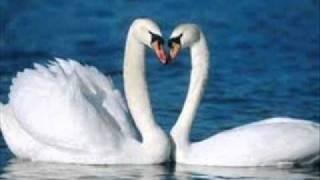 Tchaickovsky - El lago de los cisnes. - Stafaband