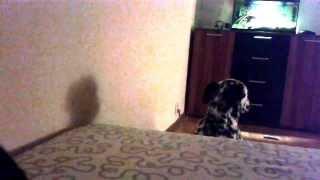Pies, który coś przeskrobał :)