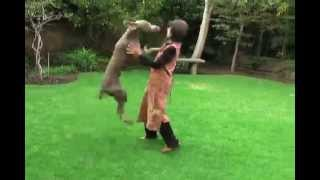 Promo Marco Ojeda / Dog Behavior, Rehabilitation & Training