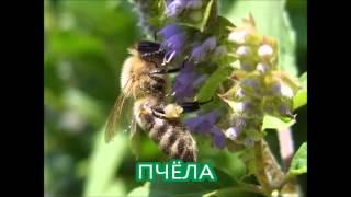 Видеофайл о насекомых