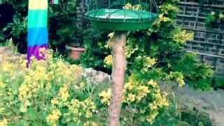 Home Made Starling-proof Bird Feeder. (instructions Below)